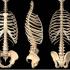 肋骨も「ゆがむ」のです